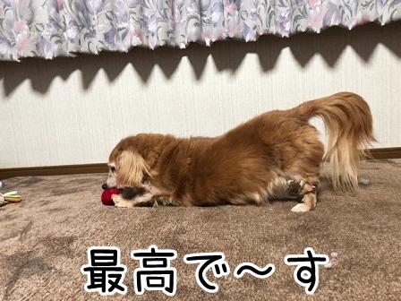 kinako20527.jpeg