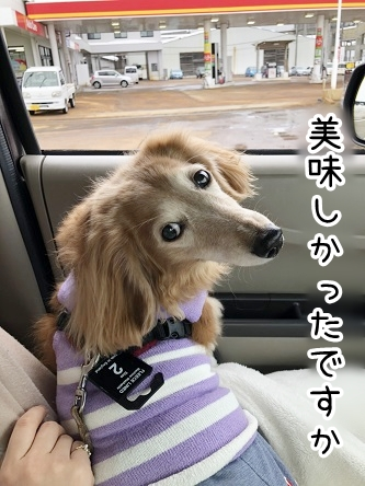 kinako20542.jpeg