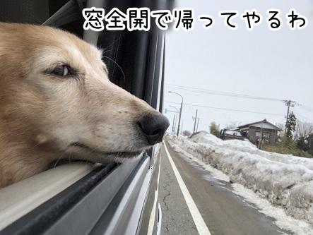 kinako20543.jpeg