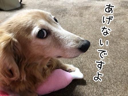 kinako20548.jpeg