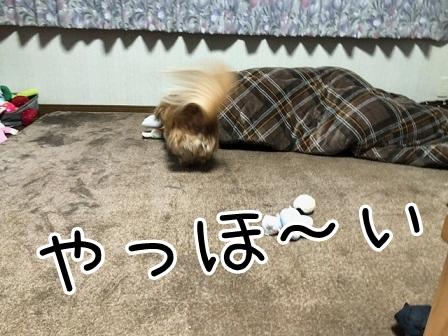 kinako20555.jpeg