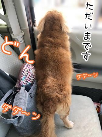 kinako20562.jpeg