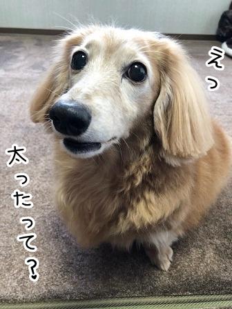 kinako20565.jpeg