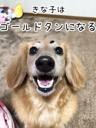 kinako20576.jpeg