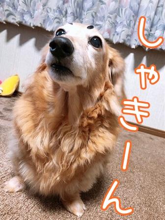 kinako20577.jpeg