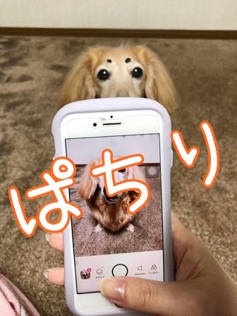 kinako20578.jpeg