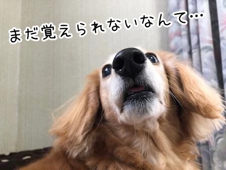 kinako20584.jpeg