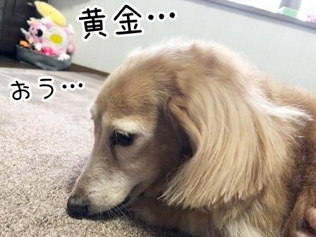 kinako20585.jpeg