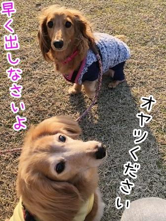 kinako20598.jpeg