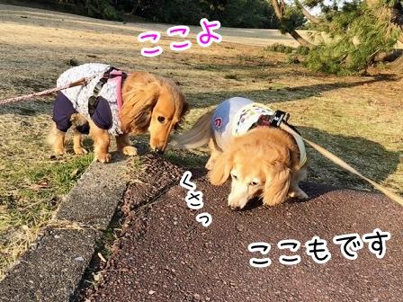 kinako20604.jpeg