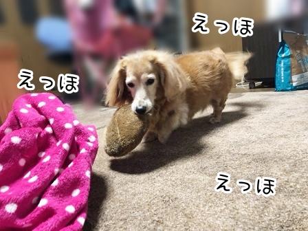 kinako20610.jpeg