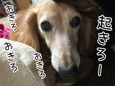 kinako20615.jpeg