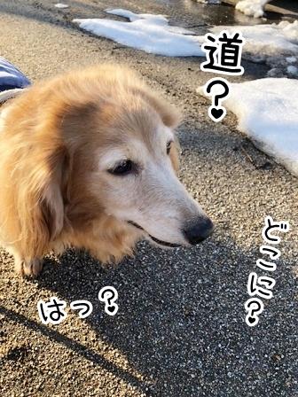 kinako20622.jpeg