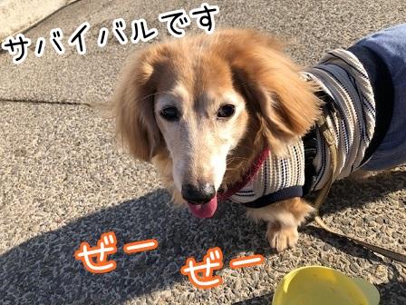 kinako20627.jpeg