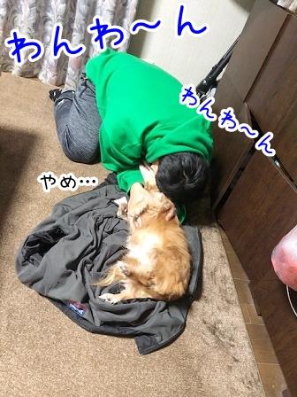 kinako20642.jpeg