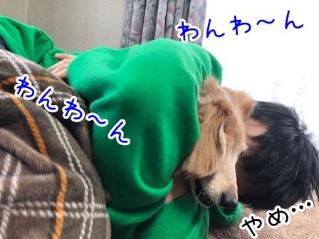 kinako20643.jpeg