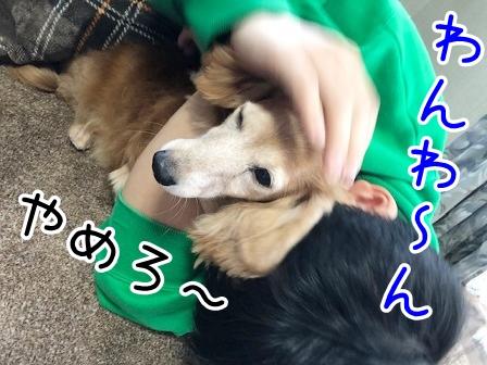 kinako20644.jpeg