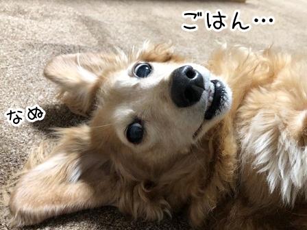 kinako20649.jpeg