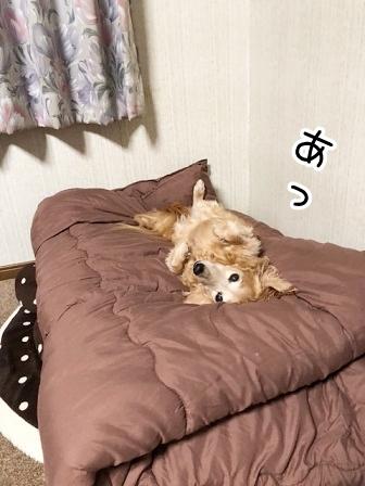 kinako20665.jpeg