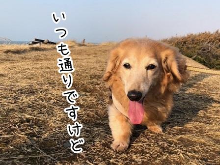 kinako20669.jpeg