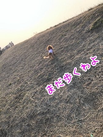 kinako20670.jpeg