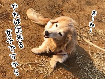 kinako20671.jpeg