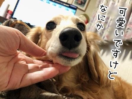 kinako20675.jpeg