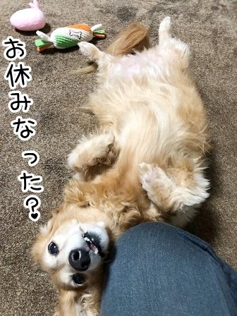 kinako20676.jpeg