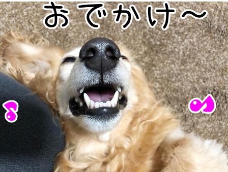 kinako20680.jpeg
