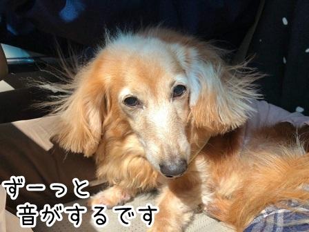 kinako20701.jpeg