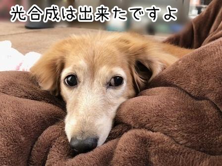 kinako20875.jpeg