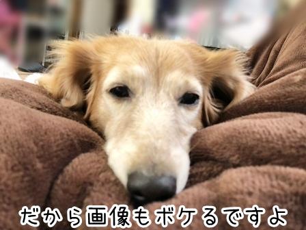 kinako20876.jpeg