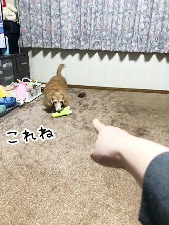 kinako20879.jpeg