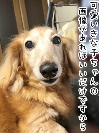 kinako20884.jpeg