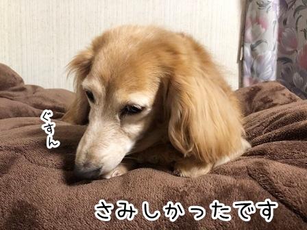 kinako20887.jpeg
