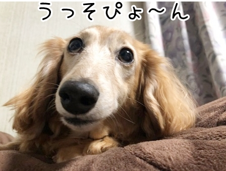 kinako20888.jpeg