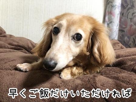 kinako20889.jpeg