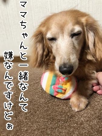 kinako20893.jpeg