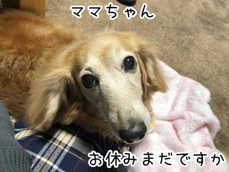 kinako20894.jpeg
