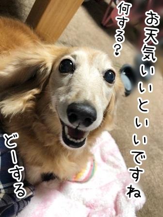 kinako20897.jpeg