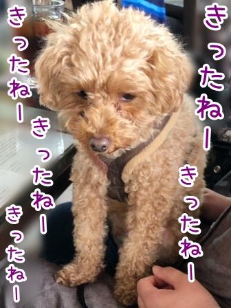 kinako20907.jpeg