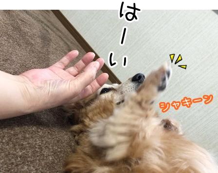 kinako20910.jpeg