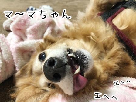 kinako20915.jpeg