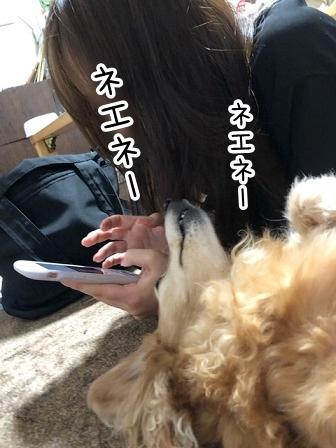 kinako20950.jpeg