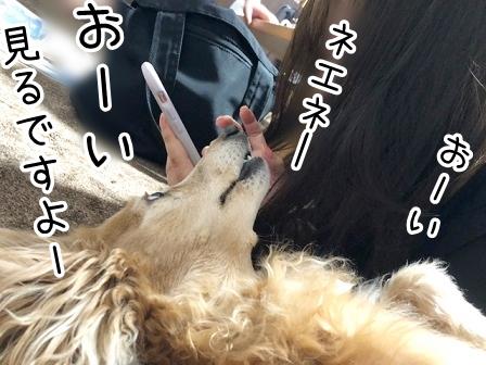 kinako20951.jpeg