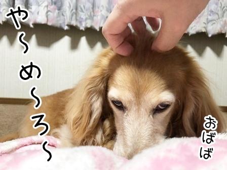 kinako20957.jpeg