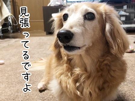 kinako20960.jpeg