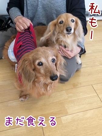 kinako20969.jpeg