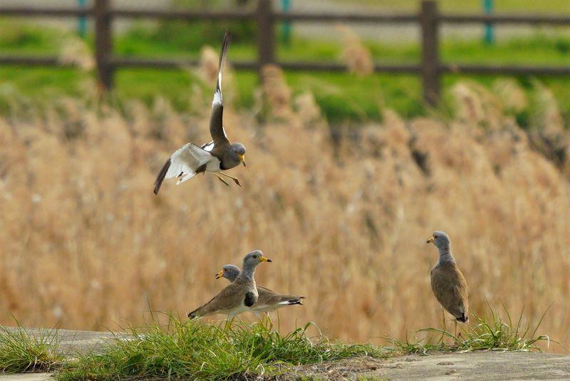 rDSC01156一羽飛ぶ