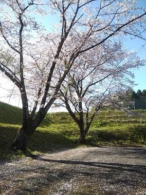桜202002